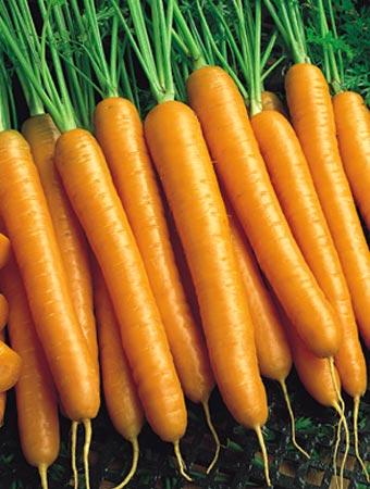 китайская морковь семена